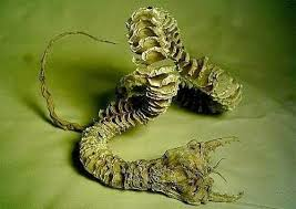 mongolian-death-worms-yuri-orlov