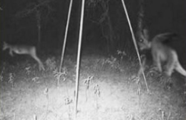 Pine Barrens Jersey devil sightings