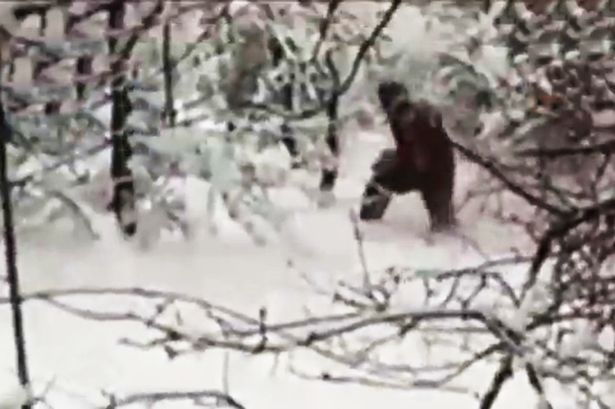 yeti-sightings-with-pictures