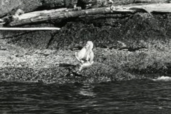 british-columbia-in-canada-mermaids