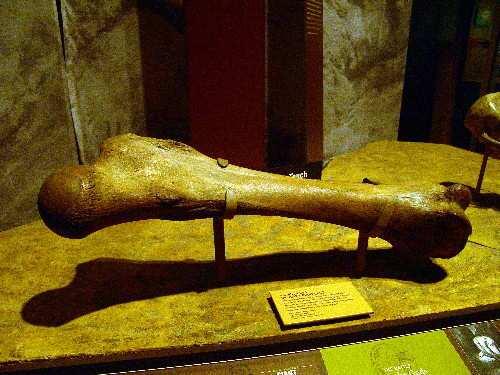 nephilim-museum-in-lima-peru
