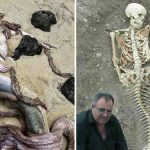 Top 10 Real Life Mermaid Found with Pictures Proved It is Real