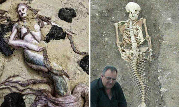 mermaids are real or just were in stories have been a common question coming to the mind of any person who at least read the story of the mermaid once - Mermaid Pictures