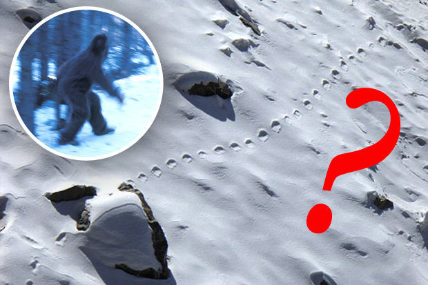 abominable-snowman-footprints-2