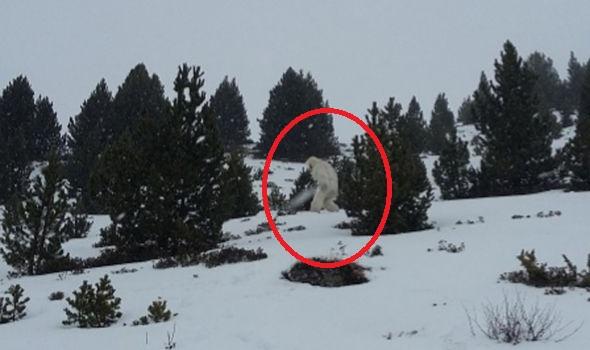 abominable-snowman-sightings
