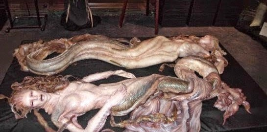 evidences-prove-the-mermaid-body-found-was-hoax