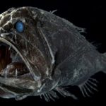 20 Fangtooth Fish Facts to Know What this Creature is