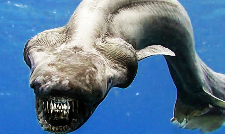 Top 10 Frilled Shark Characteristics That Have Helped It