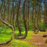 20 Mystery Facts of Hoia Baciu Forest
