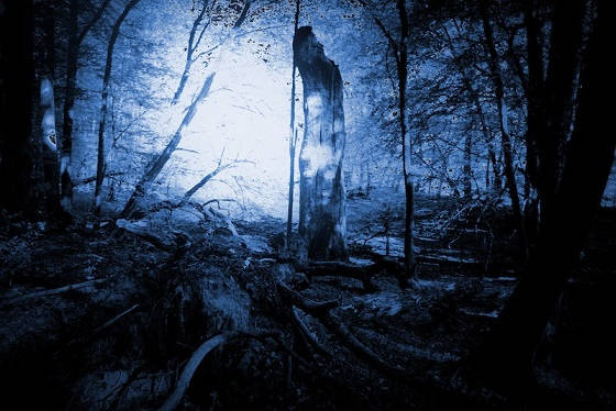 Top 10 Creepy Stories about Hoia Baciu Forest – Mysterious