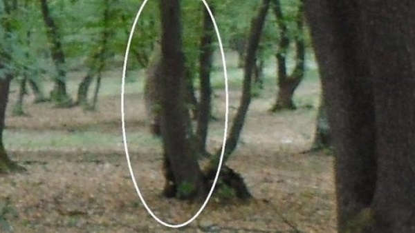Top 10 Creepy Stories about Hoia Baciu Forest – Mysterious Monsters