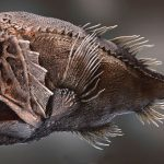 Top 10 Fangtooth Fish Characteristics that Have Helped It Survive