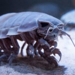 20 Facts about Giant Isopod to know what this Creature is