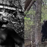Top 10 Goatman Sightings with Pictures Proved it is real