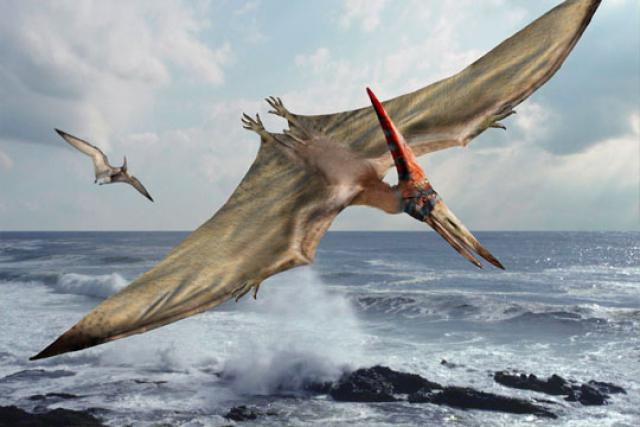 Spesies Pteranodon yang Bertahan Hidup