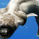 20 Interesting Facts about Frilled Shark to Know What this Creature Is