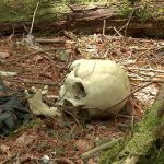 Top 10 Aokigahara Forest Stories about the Haunted Forest in Japan