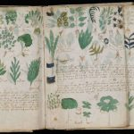 Top 10 Mysteries of the Voynich Manuscript Decoded