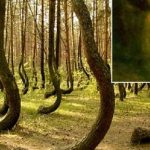 Top 10 Creepy Stories about Hoia Baciu Forest