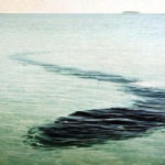 20 Mystery facts about the Hook Island Sea Monster