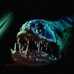 20 Facts about Black Dragonfish to Know What This Creature Is