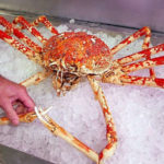 20 Facts about Giant Spider Crab to know what this Creature is