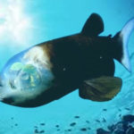 Top 10 Barreleye Fish Characteristics that Help It to Survive