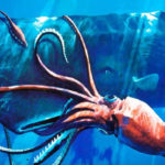 Top 10 Colossal Squid Characteristics that Have Helped It Survive